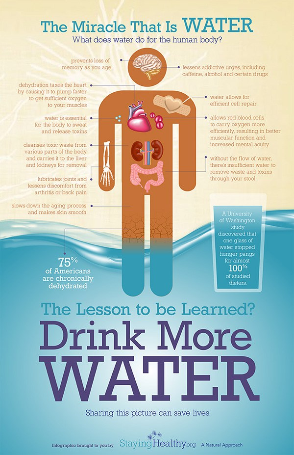 infographic: what does water do for the human body?